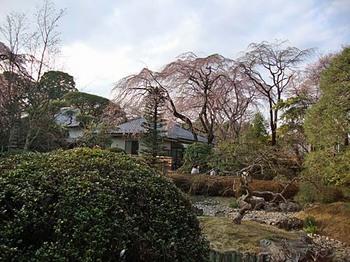 100322中院枝垂桜2.jpg