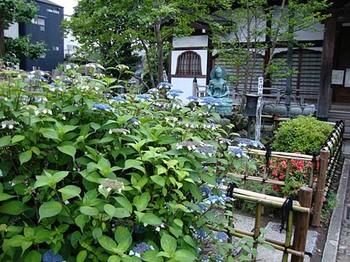2009年5月30日長喜院紫陽花.jpg