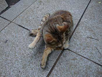 2009年5月蓮馨寺猫18.jpg