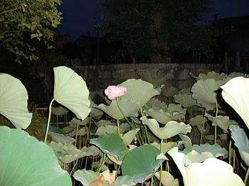 2009年7月18日長喜院6.jpg