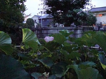 2009年7月18日長喜院7.jpg